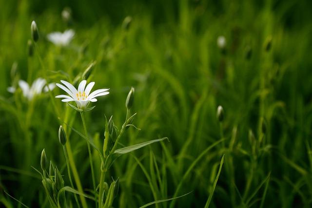 bloom-1868238_640